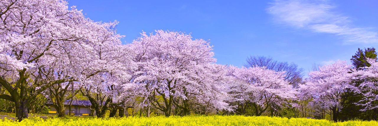 =春のおすすめデートスポット12選!関東でまったり過ごそう