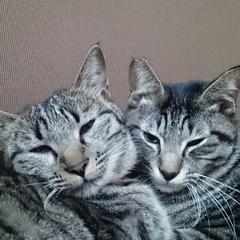 キジトラ猫のお姉ちゃん